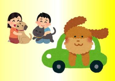 【地獄!】『ルークリ』するお車にペットの毛!もう日常茶飯事!
